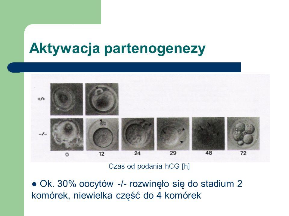 Aktywacja partenogenezy Czas od podania hCG [h] Ok.