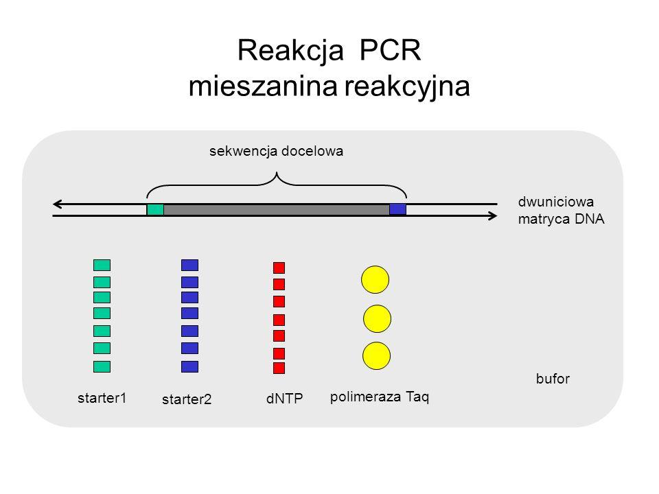 bufor Reakcja PCR mieszanina reakcyjna dNTP starter1 starter2 polimeraza Taq dwuniciowa matryca DNA sekwencja docelowa