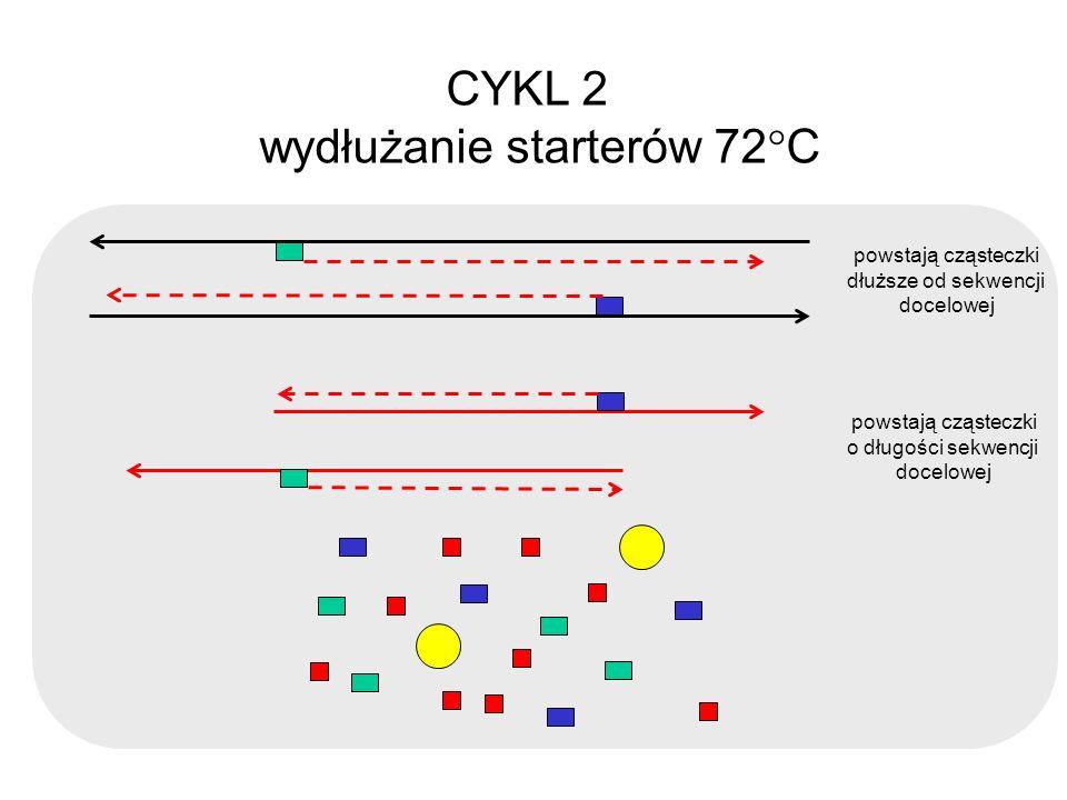 CYKL 2 wydłużanie starterów 72 C powstają cząsteczki dłuższe od sekwencji docelowej powstają cząsteczki o długości sekwencji docelowej
