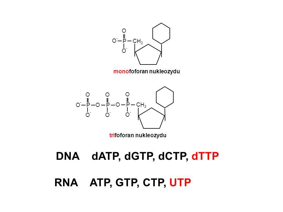 Cykl syntezy DNA w reakcji PCR etap 1 - denaturacja matrycy etap 2 - przyłączenie starterów etap 3 - wydłużanie starterów
