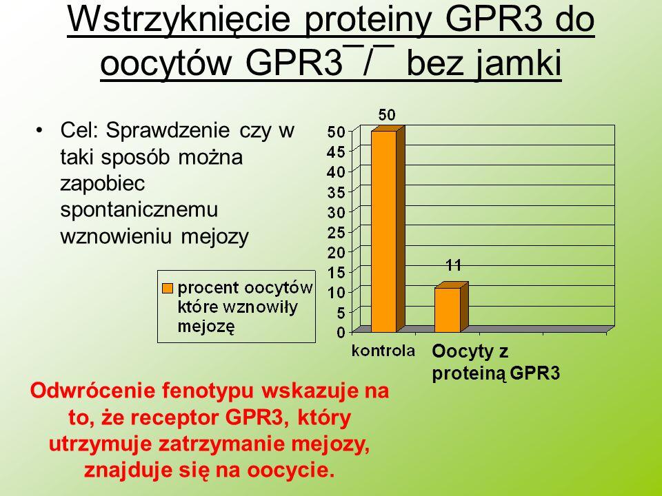 Wstrzyknięcie proteiny GPR3 do oocytów GPR3¯/¯ bez jamki Cel: Sprawdzenie czy w taki sposób można zapobiec spontanicznemu wznowieniu mejozy Oocyty z p