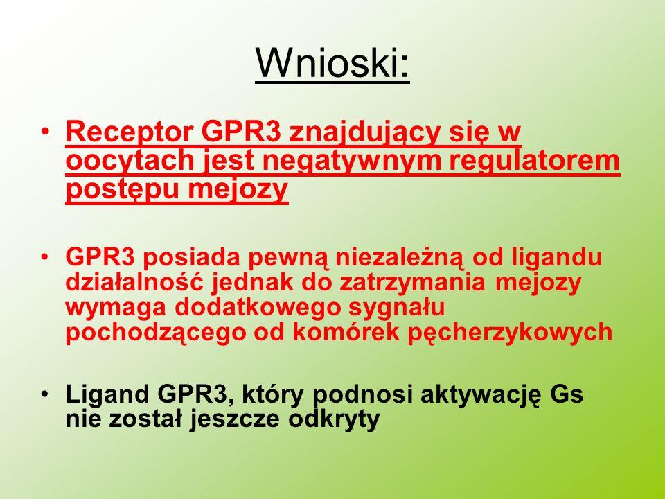 Wnioski: Receptor GPR3 znajdujący się w oocytach jest negatywnym regulatorem postępu mejozy GPR3 posiada pewną niezależną od ligandu działalność jedna