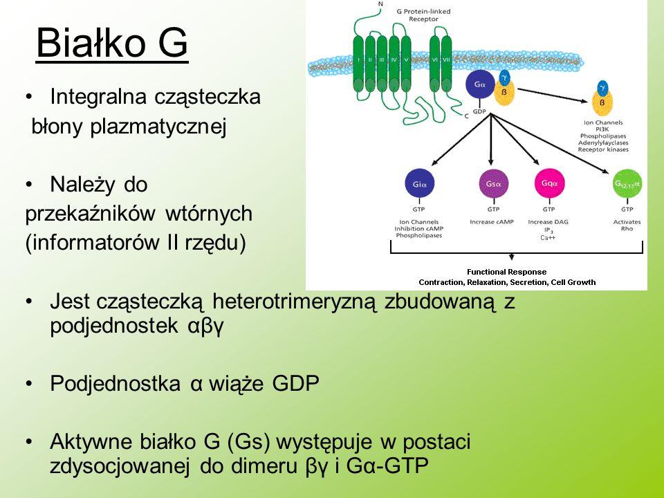 Białko G Integralna cząsteczka błony plazmatycznej Należy do przekaźników wtórnych (informatorów II rzędu) Jest cząsteczką heterotrimeryzną zbudowaną