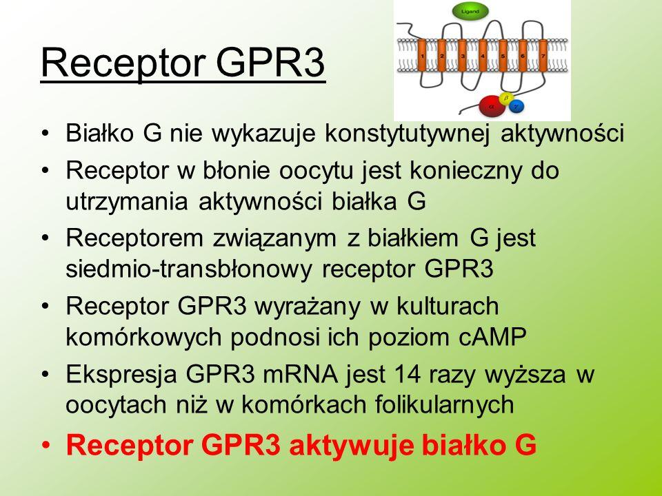 Receptor GPR3 Białko G nie wykazuje konstytutywnej aktywności Receptor w błonie oocytu jest konieczny do utrzymania aktywności białka G Receptorem zwi