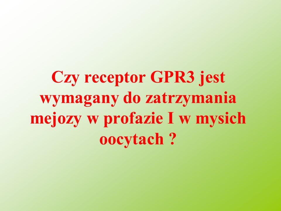 Czy receptor GPR3 jest wymagany do zatrzymania mejozy w profazie I w mysich oocytach ?