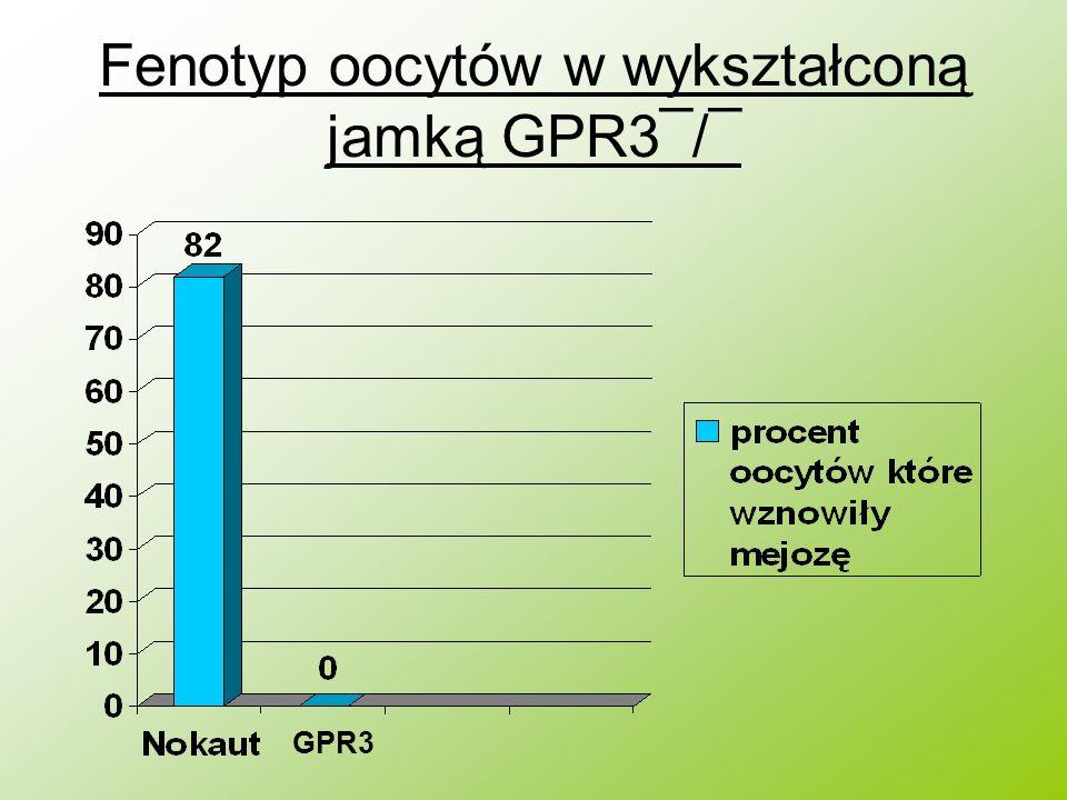 Fenotyp oocytów w wykształconą jamką GPR3¯/¯ GPR3