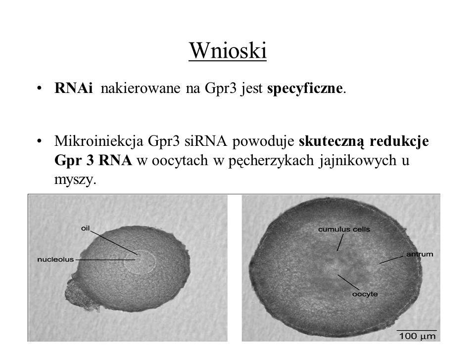 Wnioski RNAi nakierowane na Gpr3 jest specyficzne. Mikroiniekcja Gpr3 siRNA powoduje skuteczną redukcje Gpr 3 RNA w oocytach w pęcherzykach jajnikowyc