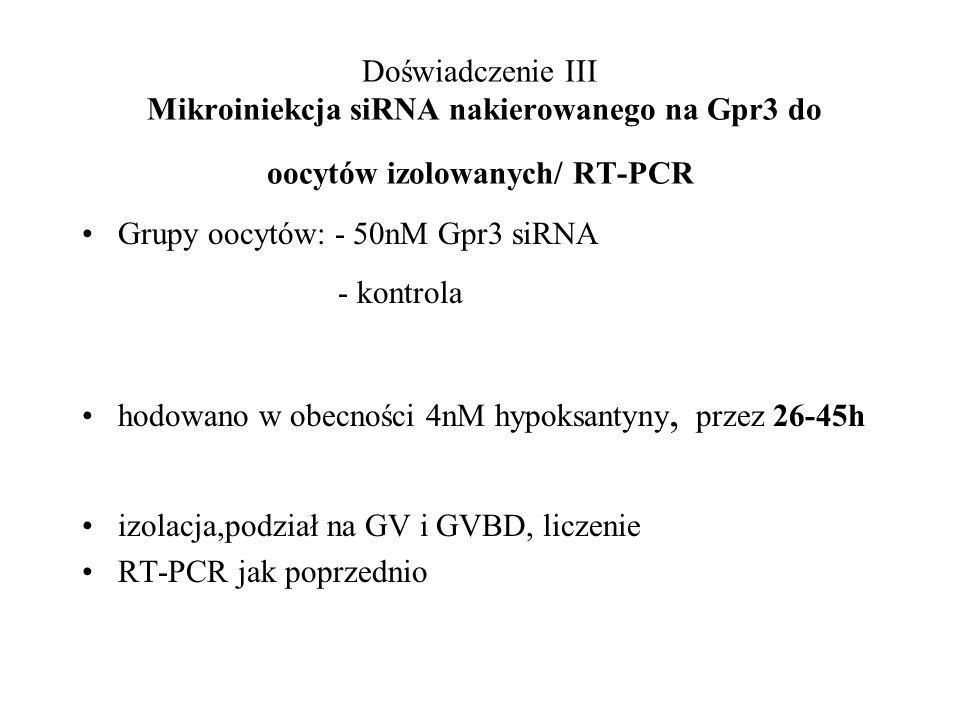 Doświadczenie III Mikroiniekcja siRNA nakierowanego na Gpr3 do oocytów izolowanych/ RT-PCR Grupy oocytów: - 50nM Gpr3 siRNA - kontrola hodowano w obec