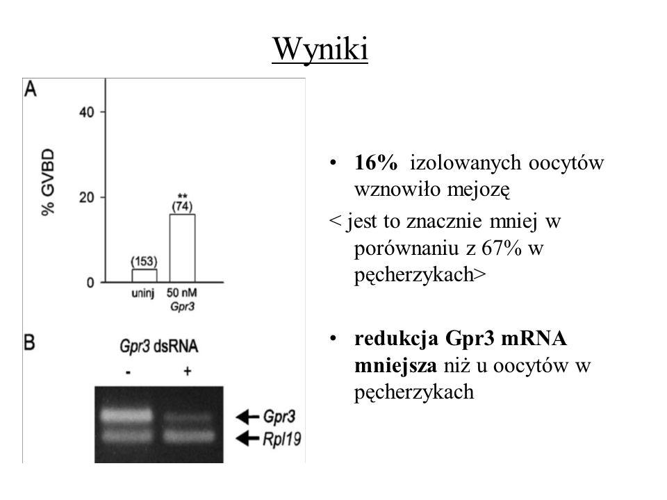 Wyniki 16% izolowanych oocytów wznowiło mejozę redukcja Gpr3 mRNA mniejsza niż u oocytów w pęcherzykach