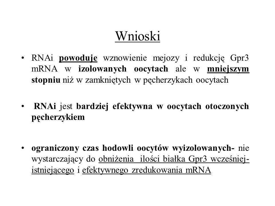 Wnioski RNAi powoduje wznowienie mejozy i redukcję Gpr3 mRNA w izolowanych oocytach ale w mniejszym stopniu niż w zamkniętych w pęcherzykach oocytach