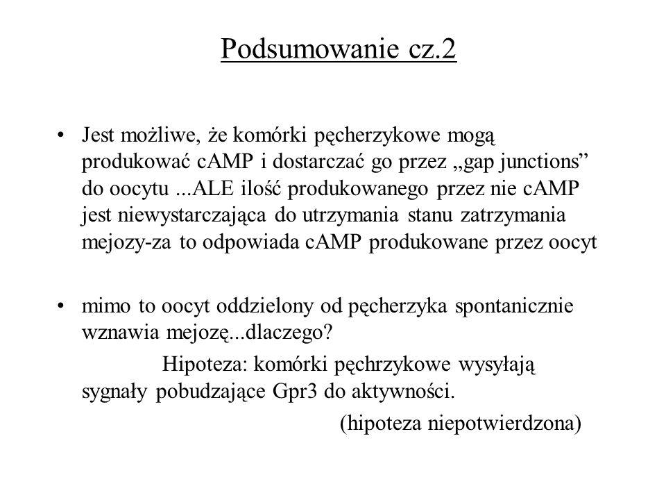 Podsumowanie cz.2 Jest możliwe, że komórki pęcherzykowe mogą produkować cAMP i dostarczać go przez gap junctions do oocytu...ALE ilość produkowanego p