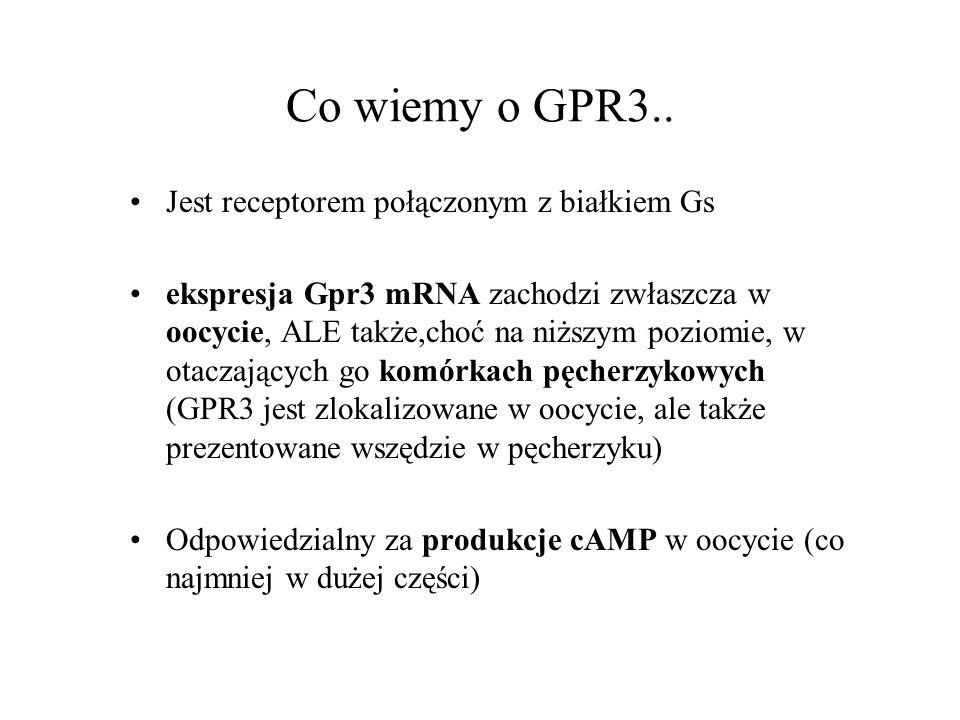 Co wiemy o GPR3.. Jest receptorem połączonym z białkiem Gs ekspresja Gpr3 mRNA zachodzi zwłaszcza w oocycie, ALE także,choć na niższym poziomie, w ota