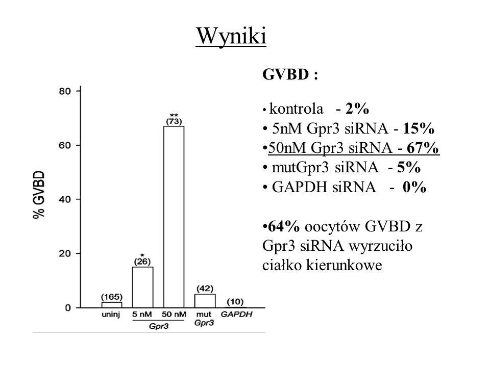 Wyniki GVBD : kontrola - 2% 5nM Gpr3 siRNA - 15% 50nM Gpr3 siRNA - 67% mutGpr3 siRNA - 5% GAPDH siRNA - 0% 64% oocytów GVBD z Gpr3 siRNA wyrzuciło cia