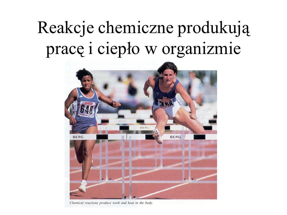 Reakcje chemiczne produkują pracę i ciepło w organizmie