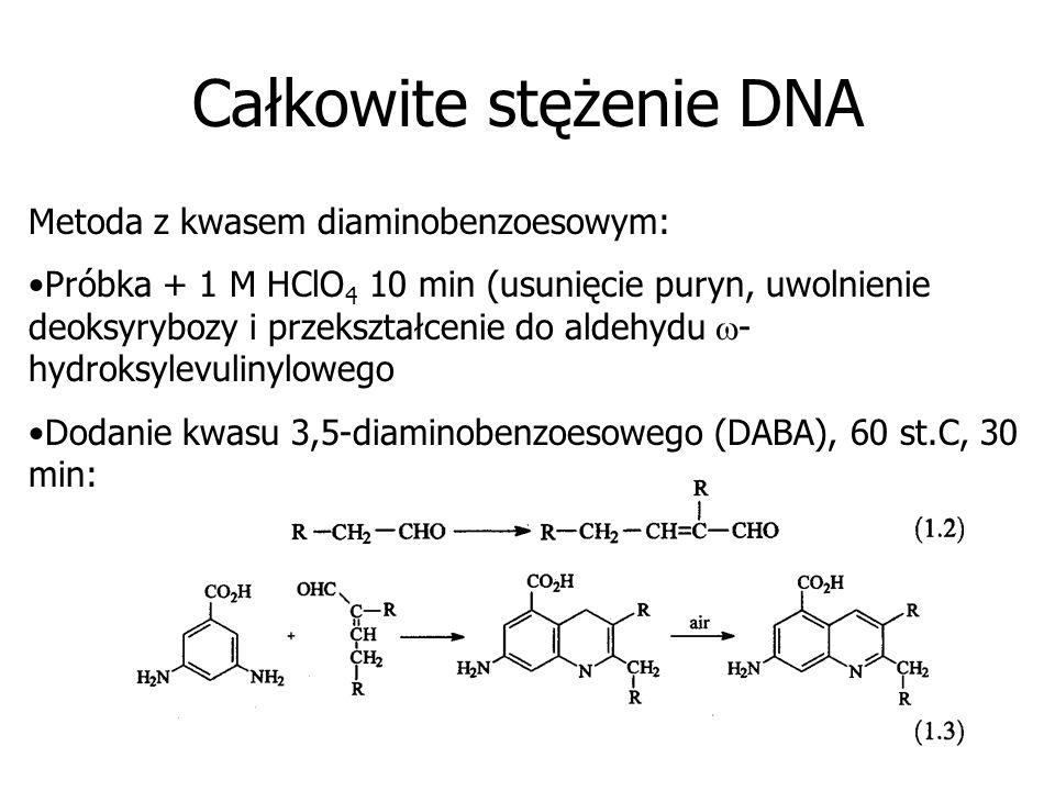 Całkowite stężenie DNA Metoda z kwasem diaminobenzoesowym: Próbka + 1 M HClO 4 10 min (usunięcie puryn, uwolnienie deoksyrybozy i przekształcenie do a