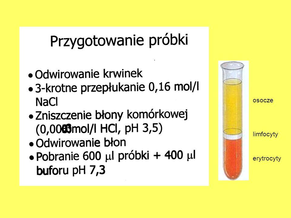 osocze limfocyty erytrocyty