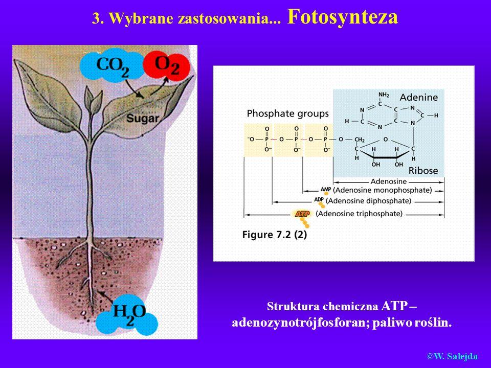 3. Wybrane zastosowania... Fotosynteza Struktura chemiczna ATP – adenozynotrójfosforan; paliwo roślin. ©W. Salejda