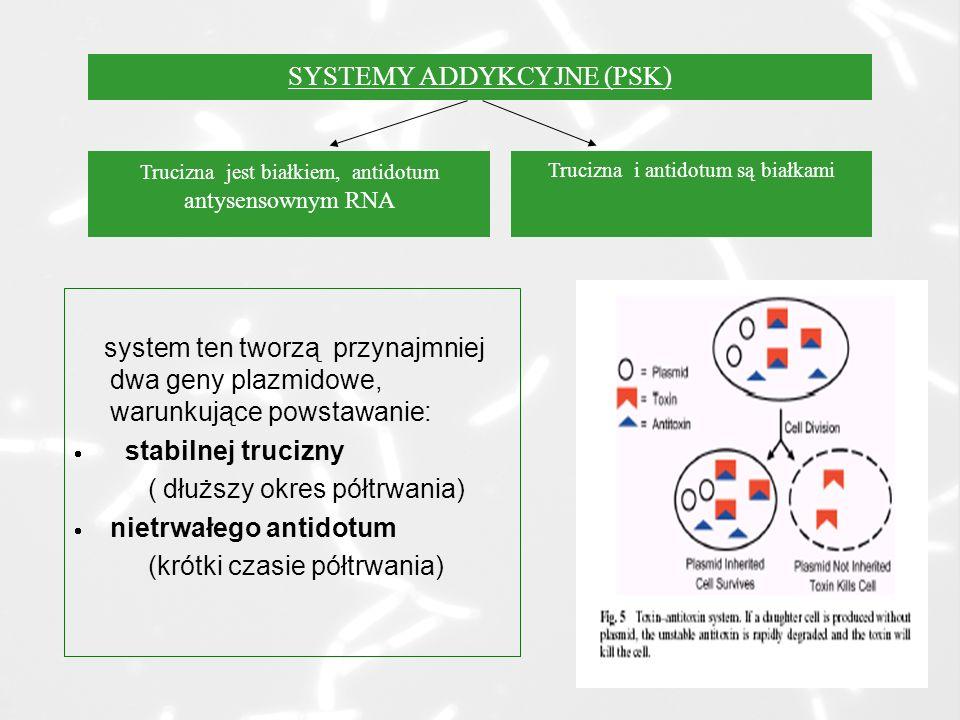 system ten tworzą przynajmniej dwa geny plazmidowe, warunkujące powstawanie: stabilnej trucizny ( dłuższy okres półtrwania) nietrwałego antidotum (krótki czasie półtrwania) SYSTEMY ADDYKCYJNE (PSK) Trucizna jest białkiem, antidotum antysensownym RNA Trucizna i antidotum są białkami