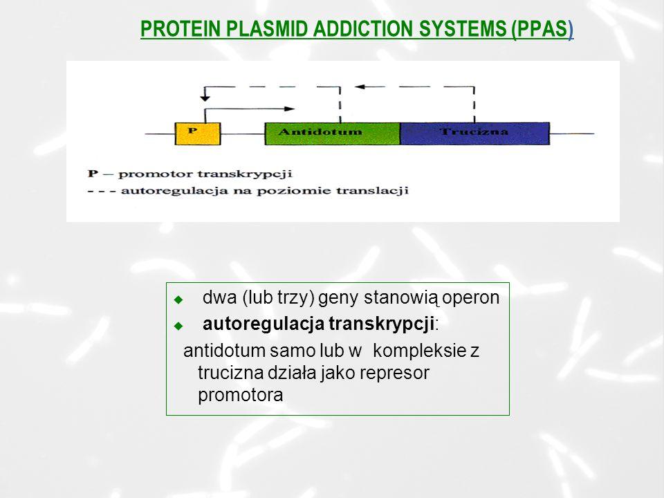 u dwa (lub trzy) geny stanowią operon u autoregulacja transkrypcji: antidotum samo lub w kompleksie z trucizna działa jako represor promotora