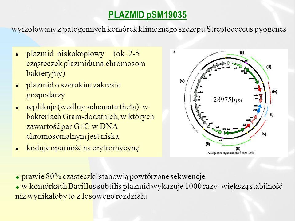 PLAZMID pSM19035 l plazmid niskokopiowy (ok.