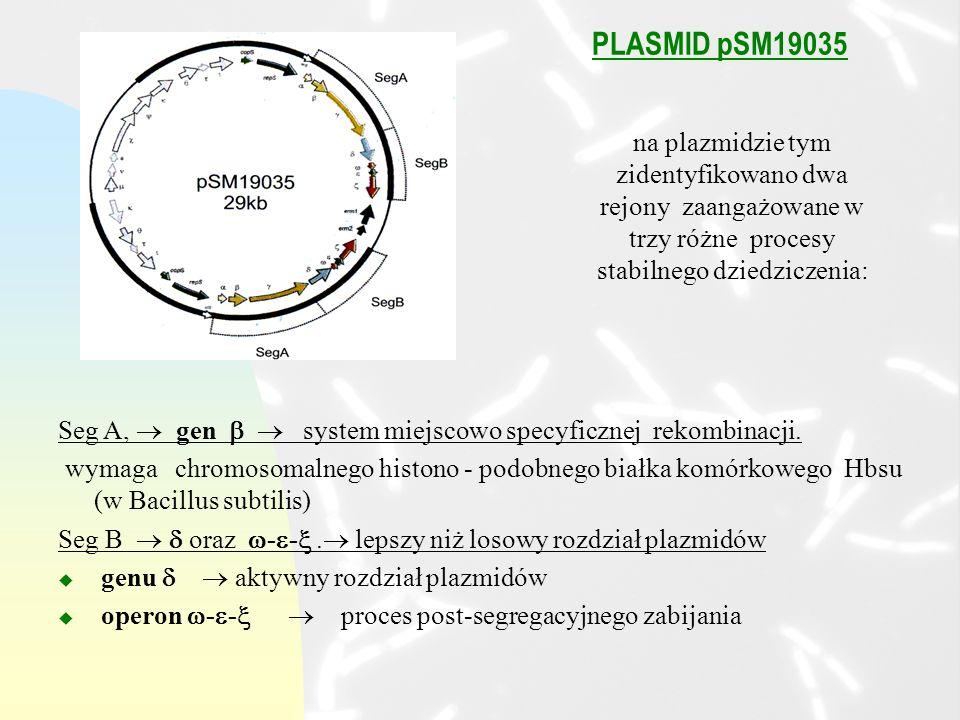 PLASMID pSM19035 Seg A, gen system miejscowo specyficznej rekombinacji.