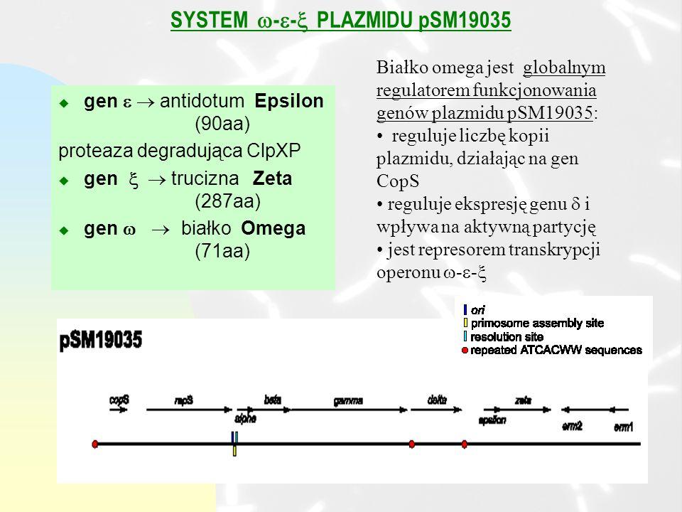 SYSTEM - - PLAZMIDU pSM19035 u gen antidotum Epsilon (90aa) proteaza degradująca ClpXP u gen trucizna Zeta (287aa) u gen białko Omega (71aa) Białko omega jest globalnym regulatorem funkcjonowania genów plazmidu pSM19035: reguluje liczbę kopii plazmidu, działając na gen CopS reguluje ekspresję genu i wpływa na aktywną partycję jest represorem transkrypcji operonu - -