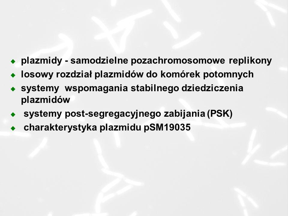 u plazmidy - samodzielne pozachromosomowe replikony u losowy rozdział plazmidów do komórek potomnych u systemy wspomagania stabilnego dziedziczenia plazmidów u systemy post-segregacyjnego zabijania (PSK) u charakterystyka plazmidu pSM19035