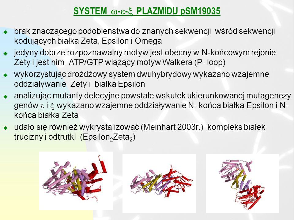 SYSTEM - - PLAZMIDU pSM19035 u brak znaczącego podobieństwa do znanych sekwencji wśród sekwencji kodujących białka Zeta, Epsilon i Omega u jedyny dobrze rozpoznawalny motyw jest obecny w N-końcowym rejonie Zety i jest nim ATP/GTP wiążący motyw Walkera (P- loop) u wykorzystując drożdżowy system dwuhybrydowy wykazano wzajemne oddziaływanie Zety i białka Epsilon u analizując mutanty delecyjne powstałe wskutek ukierunkowanej mutagenezy genów i wykazano wzajemne oddziaływanie N- końca białka Epsilon i N- końca białka Zeta u udało się również wykrystalizować (Meinhart 2003r.) kompleks białek trucizny i odtrutki (Epsilon 2 Zeta 2 )