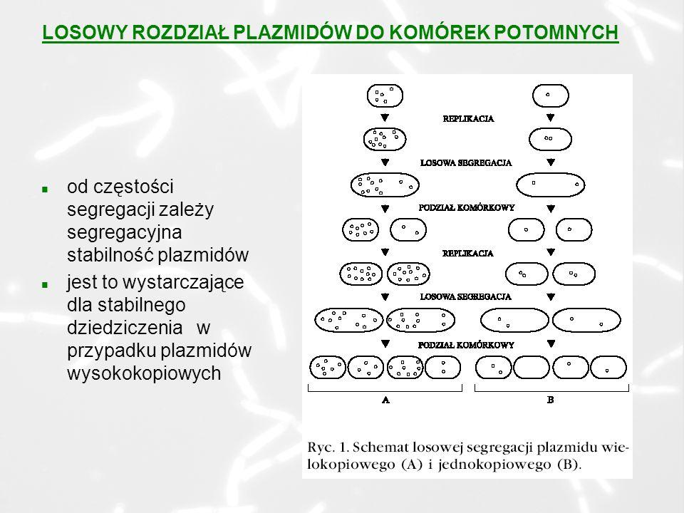 n od częstości segregacji zależy segregacyjna stabilność plazmidów n jest to wystarczające dla stabilnego dziedziczenia w przypadku plazmidów wysokokopiowych LOSOWY ROZDZIAŁ PLAZMIDÓW DO KOMÓREK POTOMNYCH