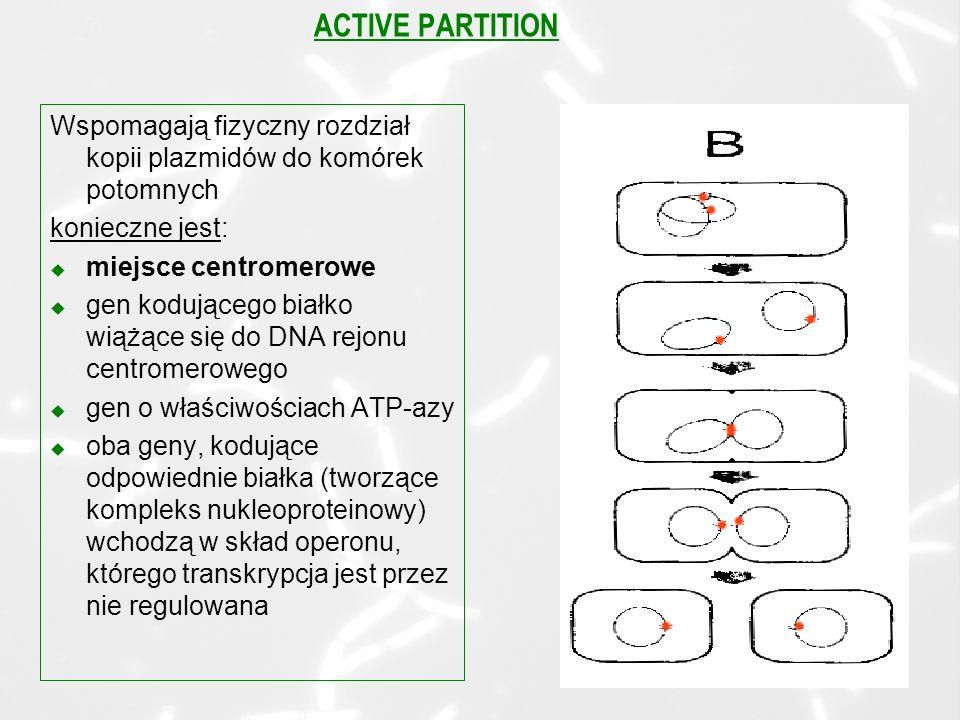 ACTIVE PARTITION Wspomagają fizyczny rozdział kopii plazmidów do komórek potomnych konieczne jest: u miejsce centromerowe u gen kodującego białko wiążące się do DNA rejonu centromerowego u gen o właściwościach ATP-azy u oba geny, kodujące odpowiednie białka (tworzące kompleks nukleoproteinowy) wchodzą w skład operonu, którego transkrypcja jest przez nie regulowana