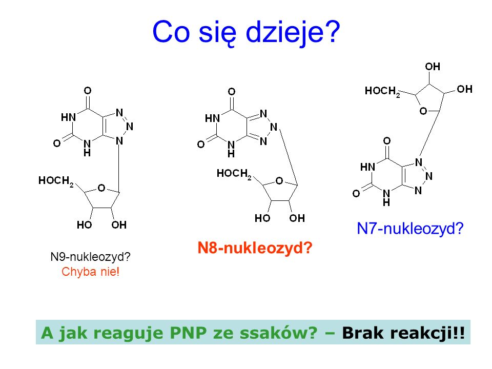 Co się dzieje? N9-nukleozyd? Chyba nie! N8-nukleozyd? N7-nukleozyd? A jak reaguje PNP ze ssaków? – Brak reakcji!!