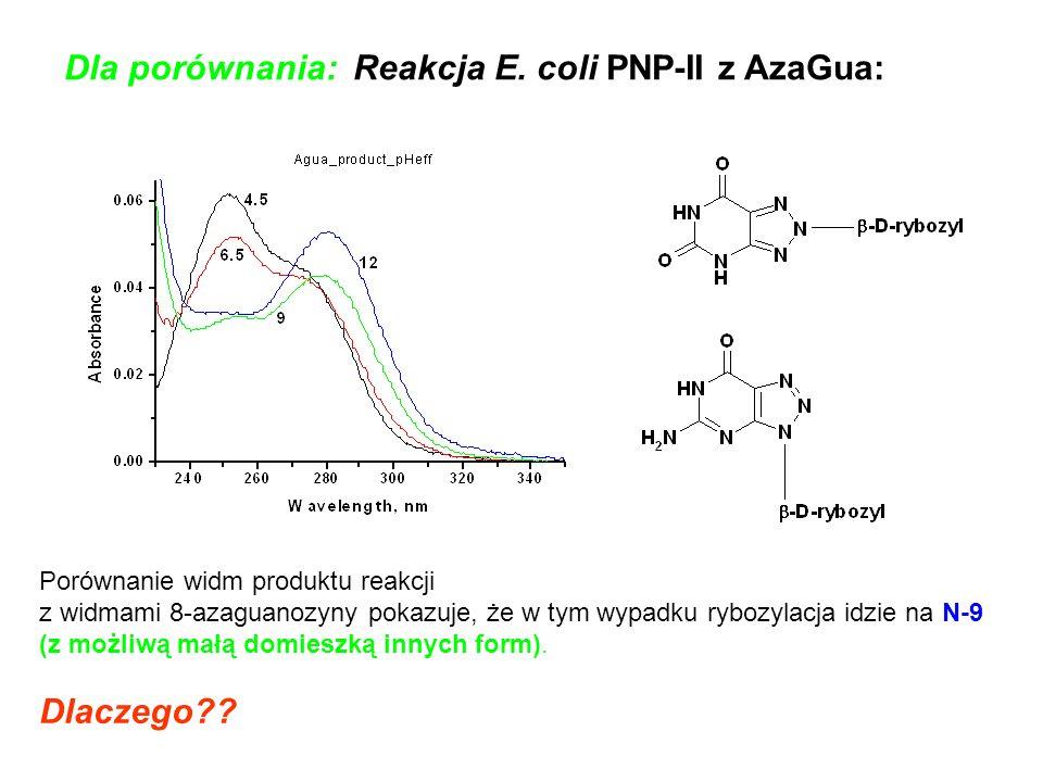 Dla porównania: Reakcja E. coli PNP-II z AzaGua: Porównanie widm produktu reakcji z widmami 8-azaguanozyny pokazuje, że w tym wypadku rybozylacja idzi