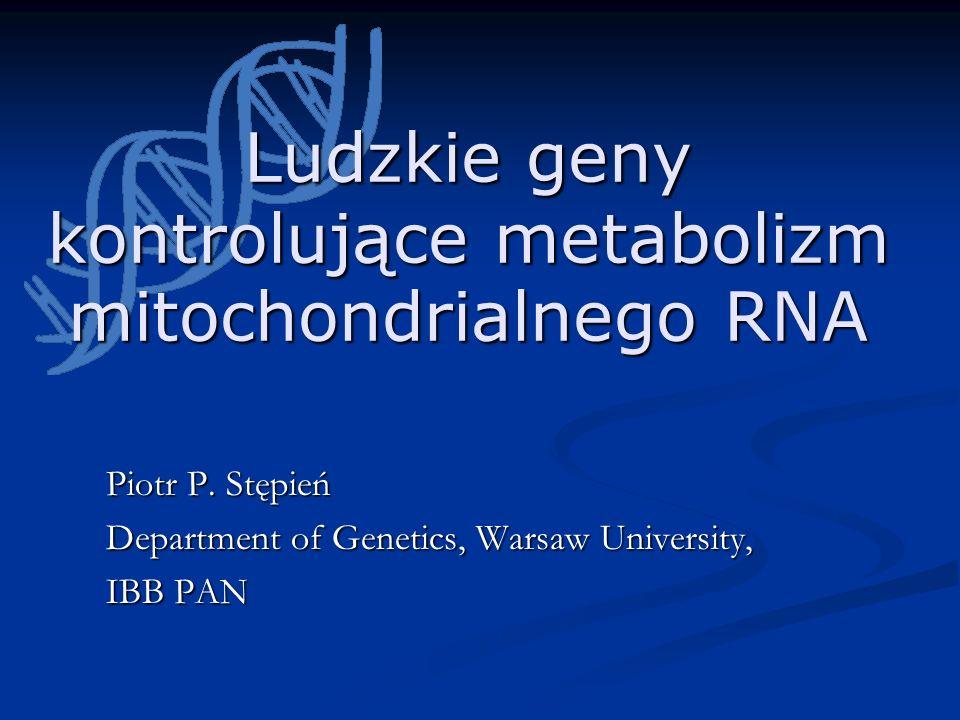 Ludzkie geny kontrolujące metabolizm mitochondrialnego RNA Piotr P. Stępień Department of Genetics, Warsaw University, IBB PAN