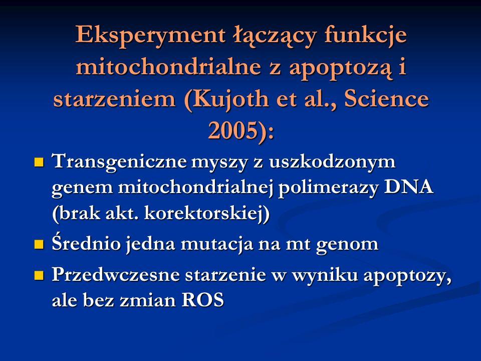 Eksperyment łączący funkcje mitochondrialne z apoptozą i starzeniem (Kujoth et al., Science 2005): Transgeniczne myszy z uszkodzonym genem mitochondri