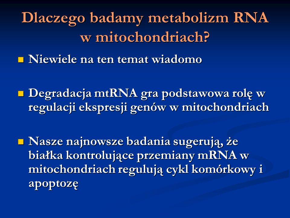 Dlaczego badamy metabolizm RNA w mitochondriach? Niewiele na ten temat wiadomo Niewiele na ten temat wiadomo Degradacja mtRNA gra podstawowa rolę w re