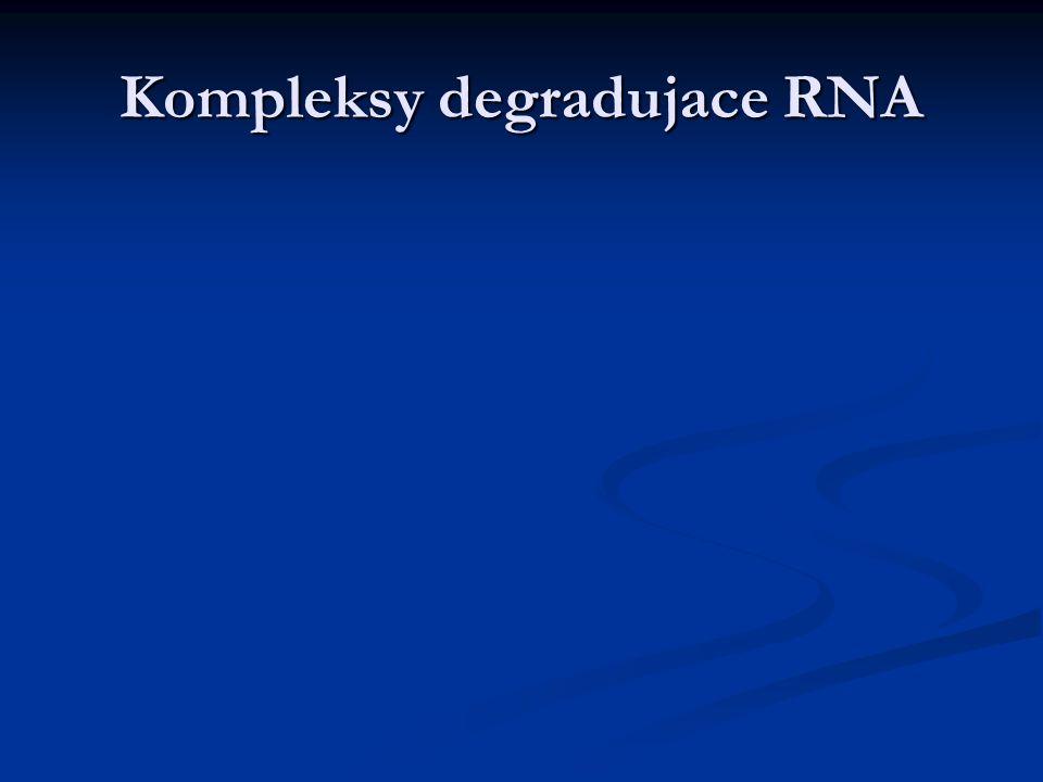 Kompleksy degradujace RNA