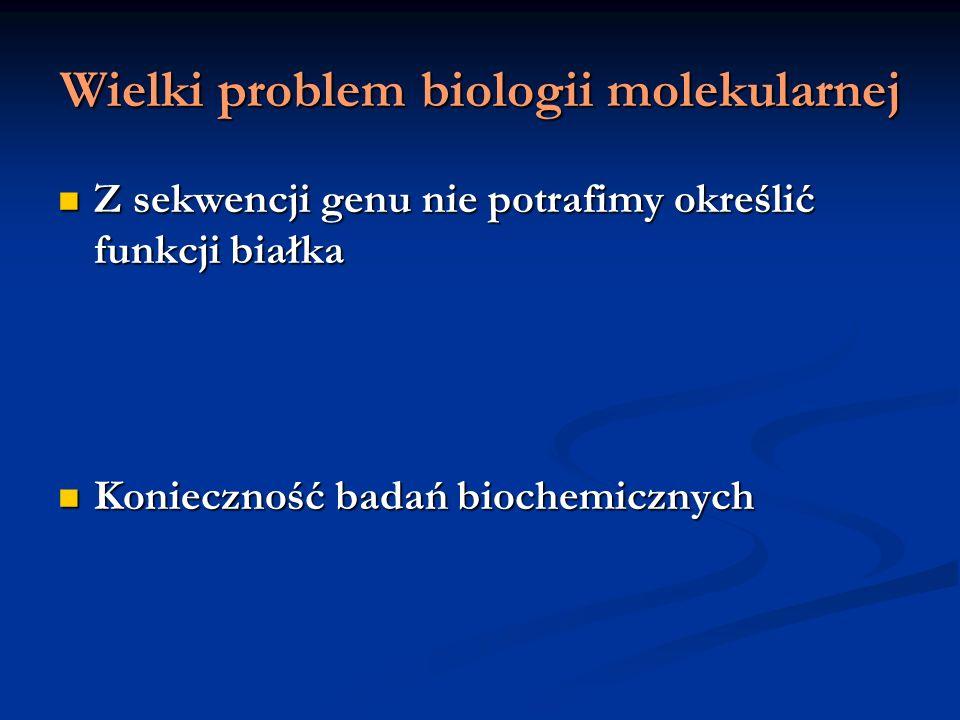 Wielki problem biologii molekularnej Z sekwencji genu nie potrafimy określić funkcji białka Z sekwencji genu nie potrafimy określić funkcji białka Kon