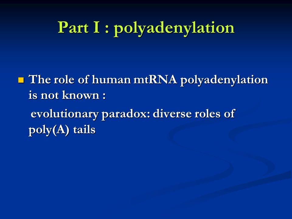 Part I : polyadenylation The role of human mtRNA polyadenylation is not known : The role of human mtRNA polyadenylation is not known : evolutionary pa