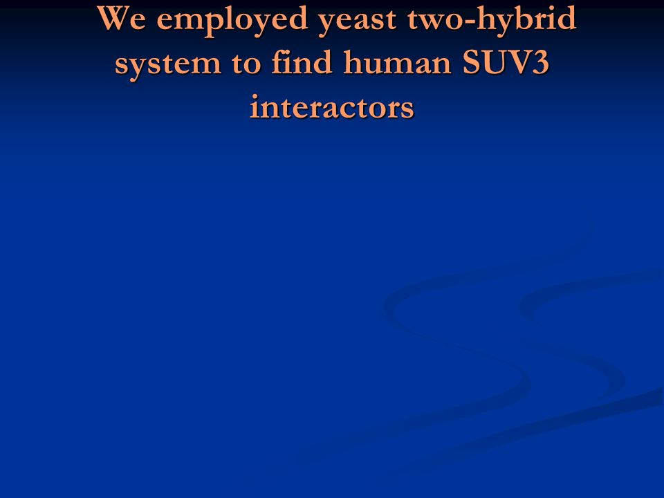We employed yeast two-hybrid system to find human SUV3 interactors We employed yeast two-hybrid system to find human SUV3 interactors