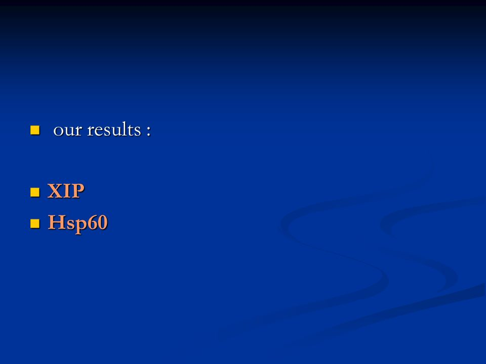 our results : our results : XIP XIP Hsp60 Hsp60