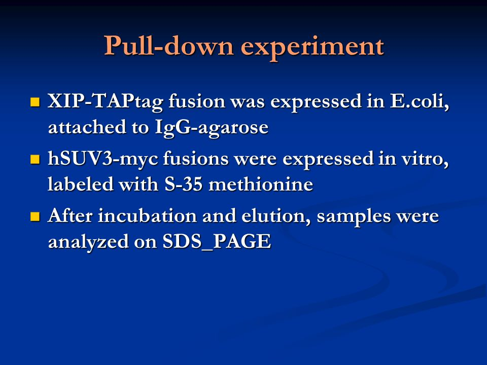 Pull-down of in vitro – translated hSuv3p protein by overexpressed XIP
