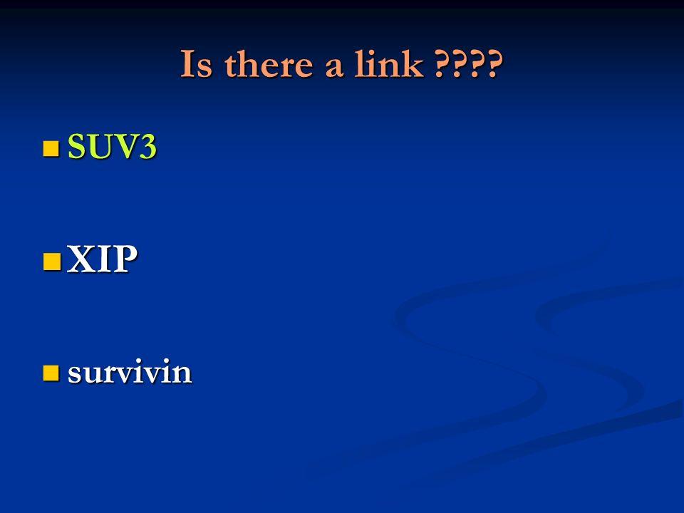 Is there a link ???? SUV3 SUV3 XIP XIP survivin survivin