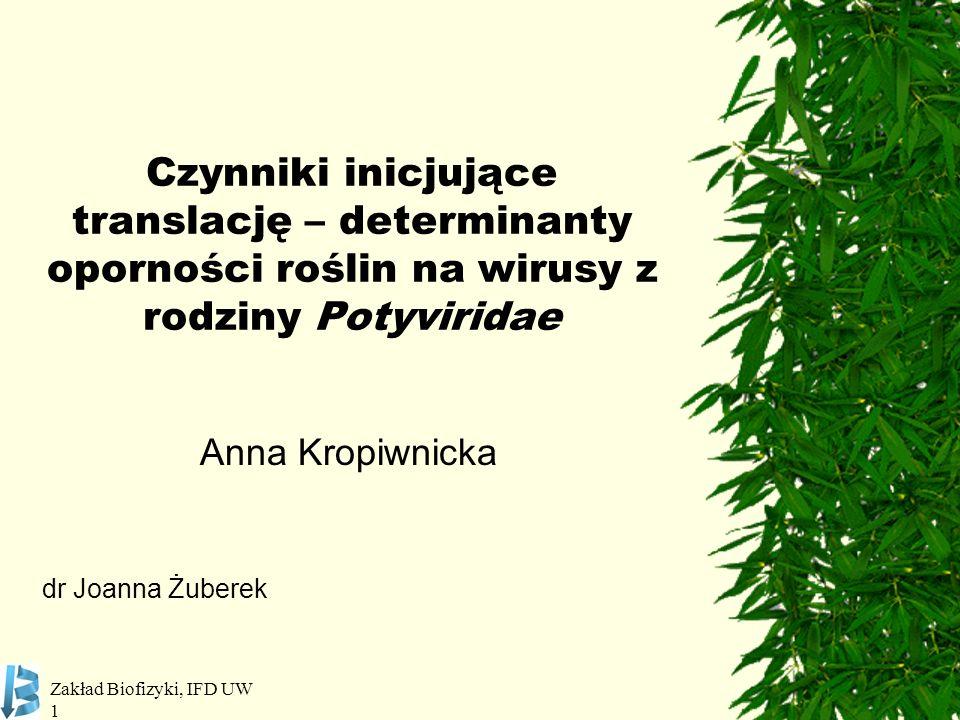 Zakład Biofizyki, IFD UW 1 Czynniki inicjujące translację – determinanty oporności roślin na wirusy z rodziny Potyviridae Anna Kropiwnicka dr Joanna Ż