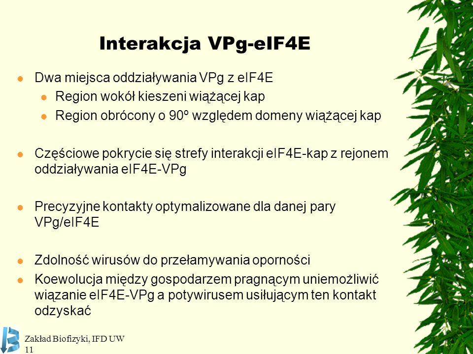Zakład Biofizyki, IFD UW 11 Interakcja VPg-eIF4E Dwa miejsca oddziaływania VPg z eIF4E Region wokół kieszeni wiążącej kap Region obrócony o 90º względ