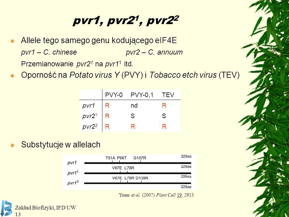 Zakład Biofizyki, IFD UW 13 pvr1, pvr2 1, pvr2 2 Allele tego samego genu kodującego eIF4E pvr1 – C. chinesepvr2 – C. annuum Przemianowanie pvr2 1 na p