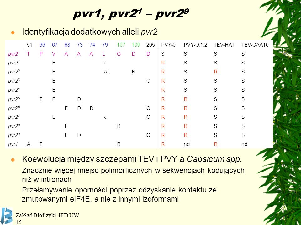Zakład Biofizyki, IFD UW 15 pvr1, pvr2 1 – pvr2 9 Identyfikacja dodatkowych alleli pvr2 Koewolucja między szczepami TEV i PVY a Capsicum spp. Znacznie