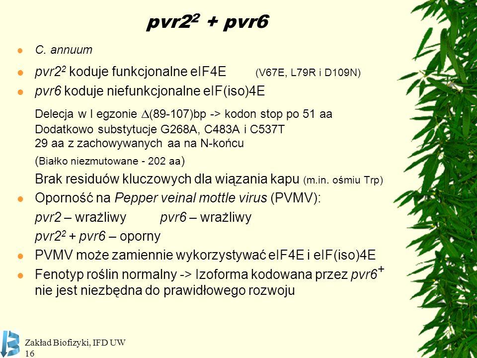 Zakład Biofizyki, IFD UW 16 pvr2 2 + pvr6 C. annuum pvr2 2 koduje funkcjonalne eIF4E (V67E, L79R i D109N) pvr6 koduje niefunkcjonalne eIF(iso)4E Delec