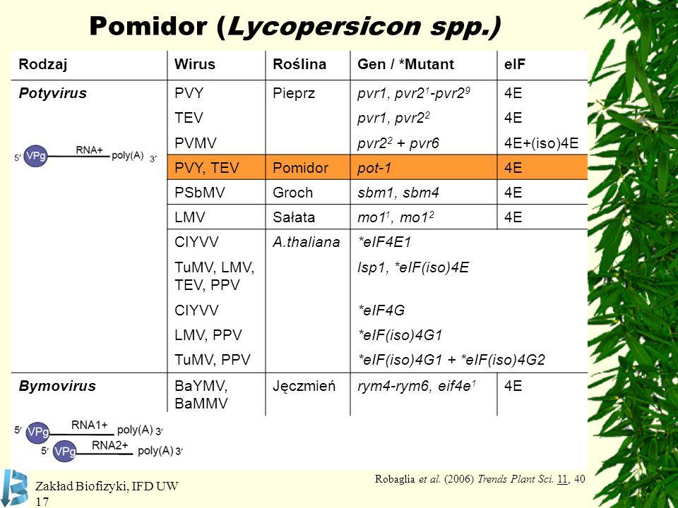 Zakład Biofizyki, IFD UW 17 Pomidor (Lycopersicon spp.) RodzajWirusRoślinaGen / *MutanteIF PotyvirusPVYPieprzpvr1, pvr2 1 -pvr2 9 4E TEVpvr1, pvr2 2 4