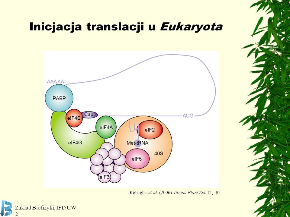 Zakład Biofizyki, IFD UW 3 Roślinny kompleks inicjujący translację eIF4E i eIF(iso)4E ~50% podobieństwa w sekwencji aa ~24 kDa eIF4G - 180 kDa eIF(iso)4G - 86 kDa eIF4F i eIF(iso)4F Podobna aktywność przeprowadzania translacji in-vitro eIF(iso)4F preferuje hipermetylowane kapy i mRNA mniej ustrukturyzowane eIF4F bardziej wydajny w prowadzeniu translacji niezależnej od kapu (RNA ustrukturyzowane i z wewnętrznymi miejscami inicjacji) oraz w warunkach inhibicji translacji zależnej od kapu Arabidopsis thaliana: Robaglia et al.