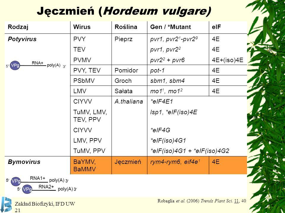 Zakład Biofizyki, IFD UW 21 Jęczmień (Hordeum vulgare) RodzajWirusRoślinaGen / *MutanteIF PotyvirusPVYPieprzpvr1, pvr2 1 -pvr2 9 4E TEVpvr1, pvr2 2 4E